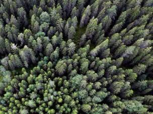 Digitalisert skog viser hvor kvalitetstrærne står