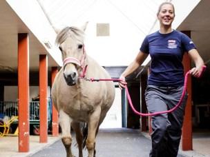 Utbredt leddlidelse hos hest skyldes tidlig svikt i blodtilførselen