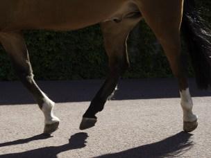 Nye forskningsfunn om leddlidelsen osteokondrose hos hest