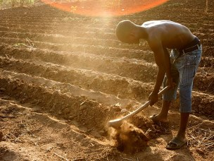 A farmer on the outskirts of Lilongwe, Malawi prepares a field for planting.