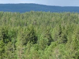 Ny rapport indikerer at minst dobbelt så mye skog må vernes
