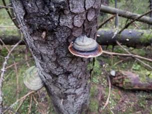 Forskere og næringsliv omfavner skogens skadesopp