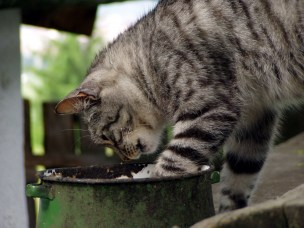 Eierløse katter løser problemet med eierløse katter