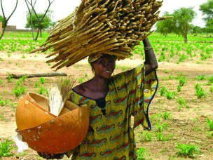 Woman farmer with pearl millet bundle.