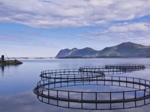 Reducing salmon climate footprint through novel Norwegian feed
