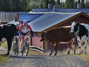 Lillehammer is a stronghold for outdoor sports and recreation. The town hosts several events and competitions annually, like the 86 km long classic MTB race Birkebeinerrittet.