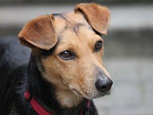 Stiftelsen Kreft hos hund lyser ut forskningsmidler.