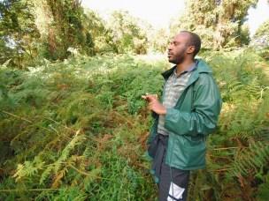 Bregner forhindrer gjenvekst av afrikansk skog