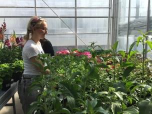 La deg fascinere av planter