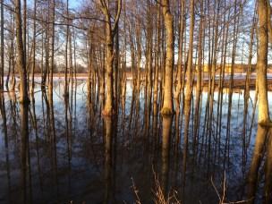 trær i vann