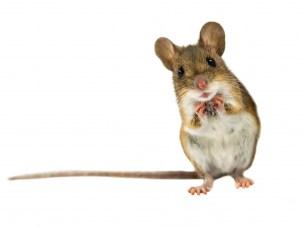 Karbohydrat-rik diett ga mer kreft enn rødt kjøtt