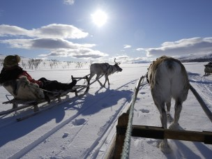 Sverige har langt fleire økosertifiserte bedrifter enn Noreg, men majoriteten av dei naturbaserte reiselivsbedriftene i begge land er negative til økosertifisering.