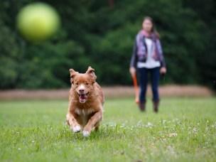Vi søker eiere som kan plukke opp bæsjen etter hunden sin og bidra til forskning samtidig.