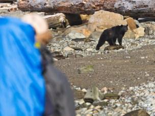 Turgåer møter to bjørner, Vancouver Island, British Columbia, Canada.