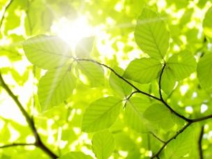 Blader i sollys