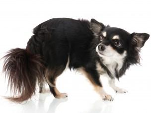 Redd hund