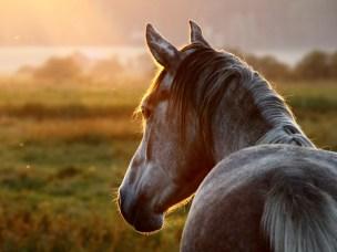 Hesteklinikken