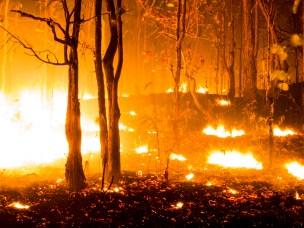 Skogbrann ruster trær for varmere klima