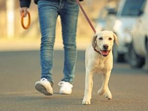 For å beskytte syke dyr og hunden selv er det ikke lov å ha hunden løs på campus. Ta hensyn til andre, bruk bånd og pose.