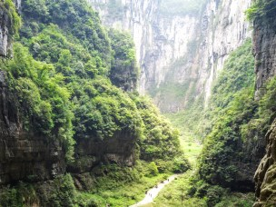Subtropisk skogsjord er en viktig kilde til utslipp av nitrogenoksider