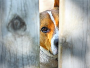 Mishandling av dyr kan sees i sammenheng med mishandling av barn. Begge deler er grusomt og må forhindres. Her kan veterinærer gjøre en svært viktig jobb.