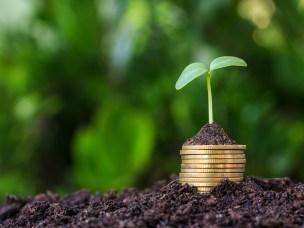 Finnes grønn vekst?