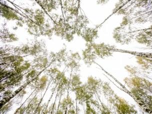 Trær kommuniserer også