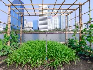 Nytt forskningsprosjekt om urbant landbruk skal heve livskvaliteten i norske byer
