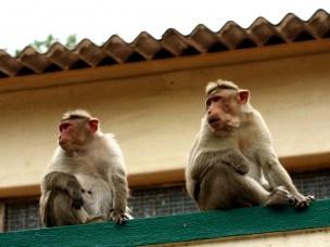 Parasitter kan smitte mellom ville dyr og mennesker