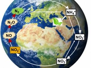 Organismene som omdanner drivhusgassen N₂O til harmløs N₂