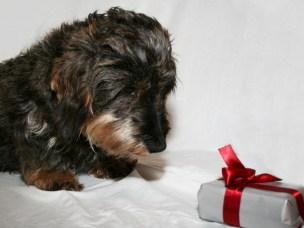 Slik gir du kjæledyra en forventningsfull jul