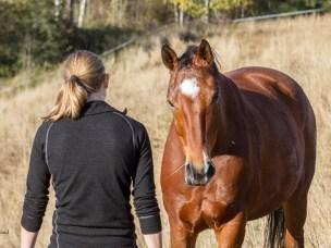 Hest og menneske