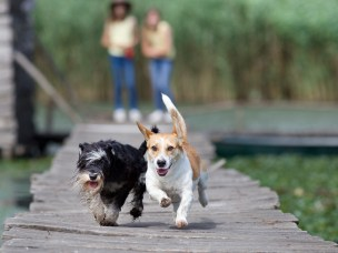 NMBU-professor Lucy J. Robertson er førsteforfatter på en artikkel hvor teorien om at Guardia-smitte fra drikkevannskilde i 2004 skyldtes hundeskitt.