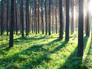 Kampen om det grønne karbonet