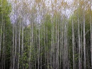Sopp og insekt ryddar skogvegen