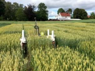 Bildet viser roboten  Thorvald i felt