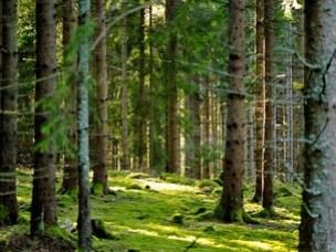 For å få fram spesialtilpassede enzymer leter forskerne i naturen, f eks i skogen. Her finnes det mye spennende som er lite kartlagt.