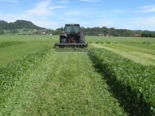 Betre nitrogenutnytting av grøngjødsel