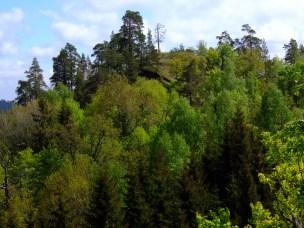 Variert skoglandskap - Vemannsås naturreservat
