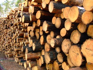 Kampen om tømmerstokken