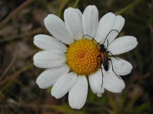 Bille i blomst