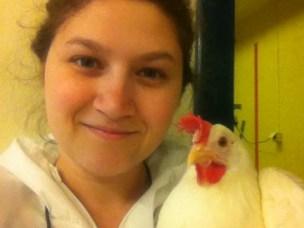 Oppvekstmiljøets betydning for høners tilpasningsevne