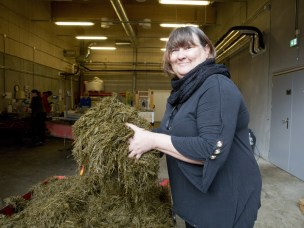 Research to improve grass silage quality and digestibility