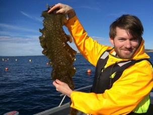 Kelp breeding – Norway`s next salmon adventure?