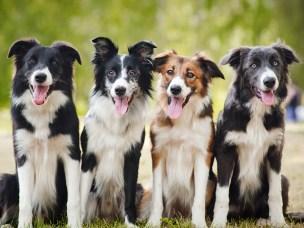 Hunder