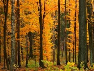 Skogen kan bidra på mange måter til den nye bioøkonomien.