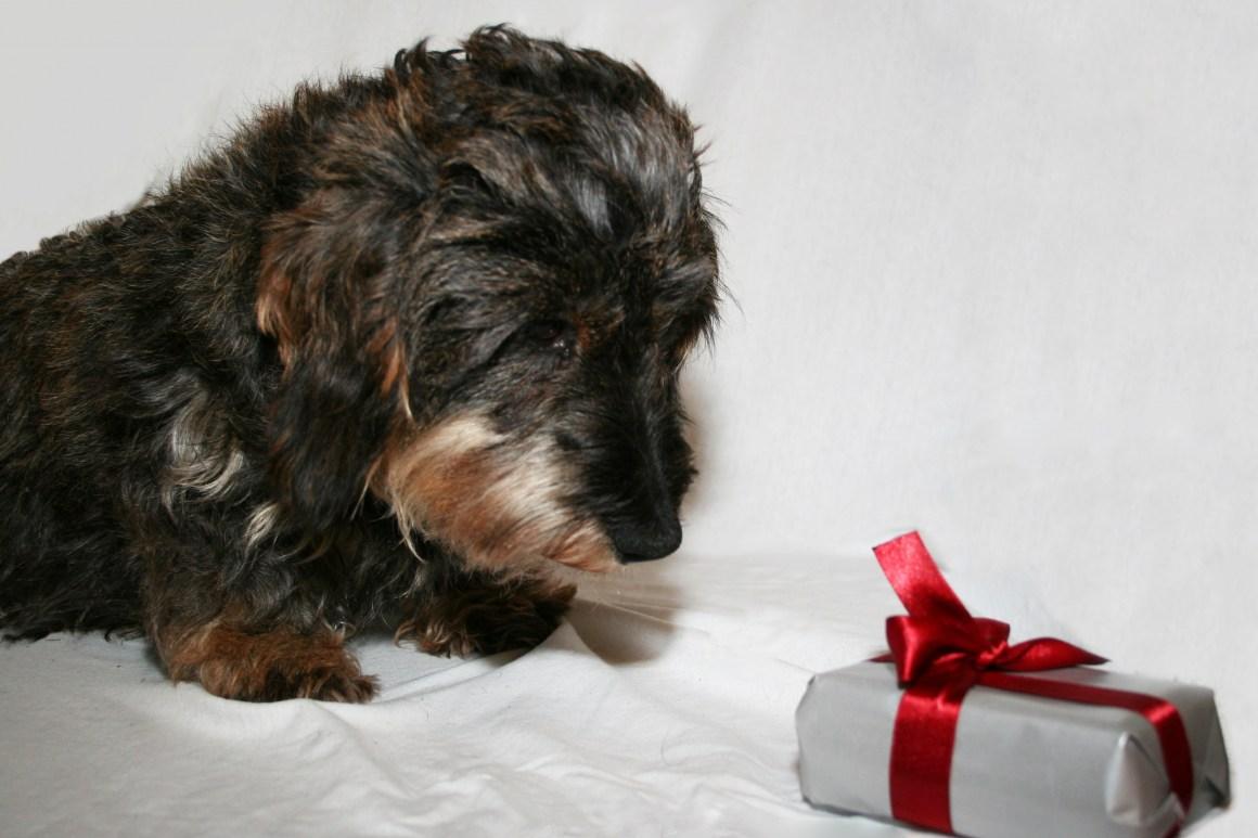 Hunden har en positiv opplevelse av å glede seg til å få den innpakkende go'biten