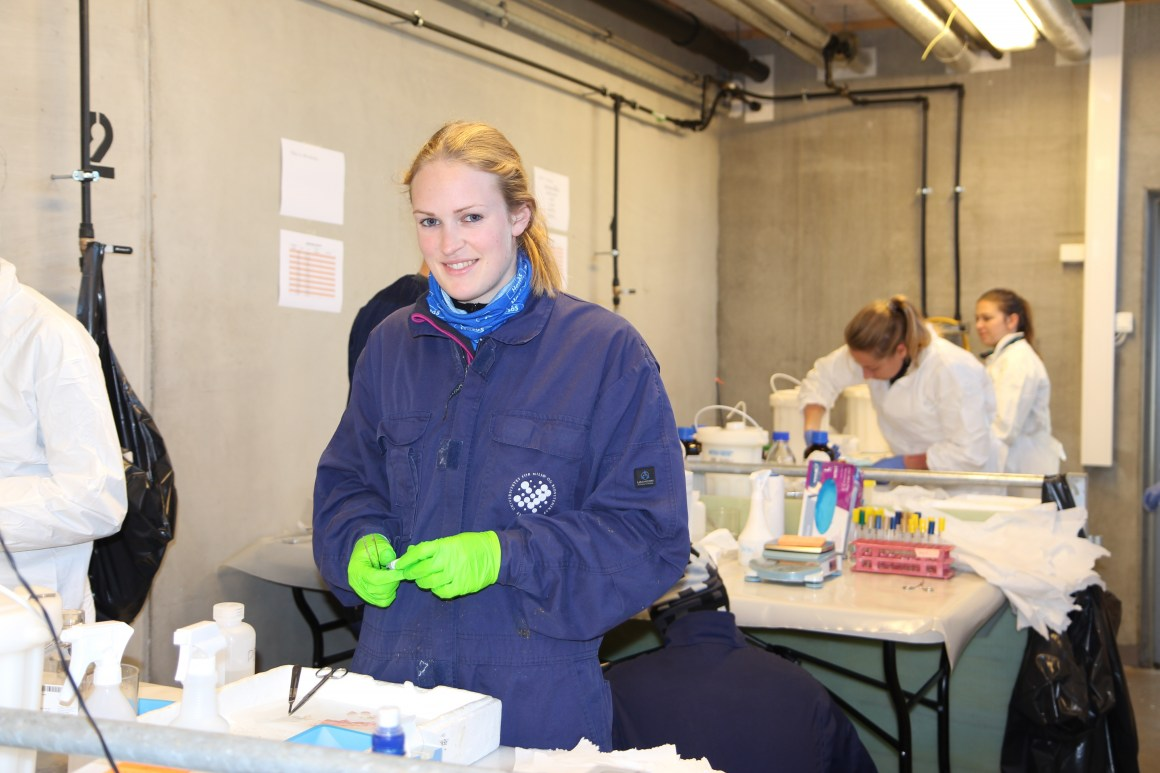 In a mobile laboratory, Håkenåsen and her colleagues in the Foods of Norway team take lots of samples from the gut of the piglets.