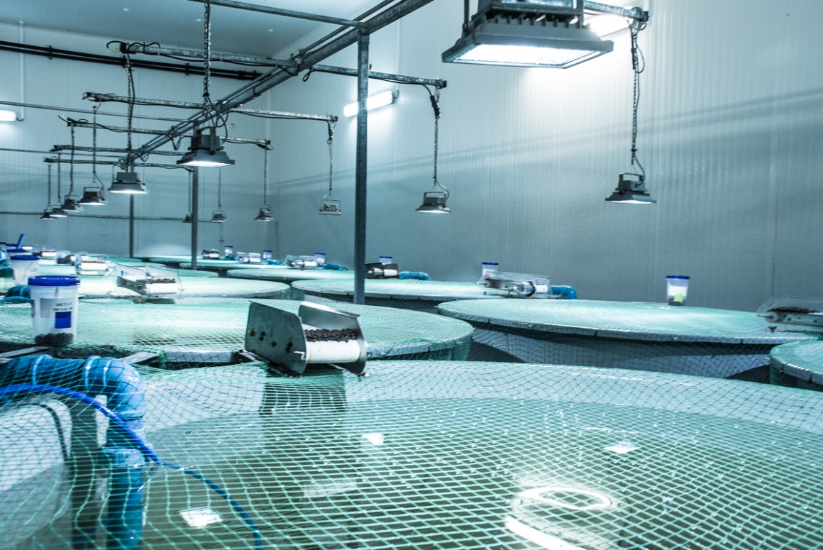 BioMar supplies fishfeed to around 80 countries and is committed to the development of a sustainable aquaculture industry.