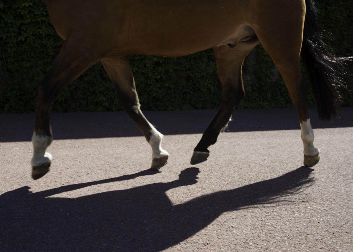 Silosjuke hos hest kan gi bevegelsesproblemer.